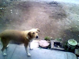 """La perra """"se jugaba la vida entre los camiones y los coches por proteger a su compañero que..."""