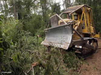 """""""La ley que fue aprobada ayer en el Senado reduce la protección de los bosques, amnistía a los..."""