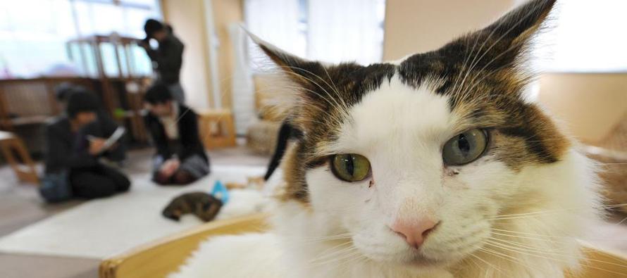 Las cafeter�as de gatos de Jap�n ampl�an su horario