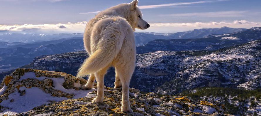Al llamar a los terroristas lobos solitarios, automáticamente los enmarcamos como desviados...