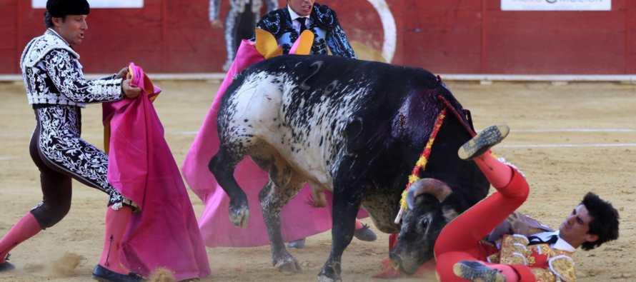 Congreso discute prohibir asistencia de ni�os a corridas de toros