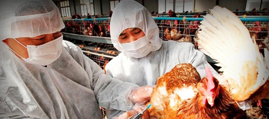 Ante la proliferación de brotes de gripe aviar, la Oficina de Inspección y Cuarentena ha pedido a...