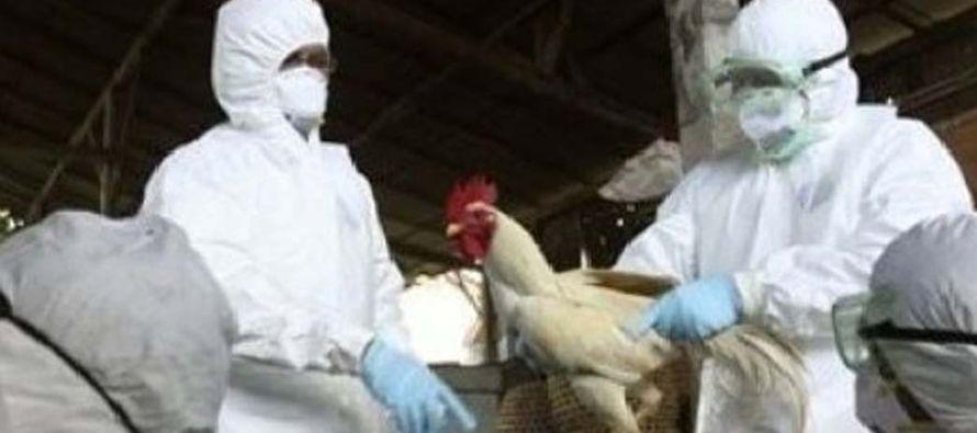 Desde noviembre del pasado año, el subtipo altamente patógeno H5 de la gripe aviar se ha detectado...