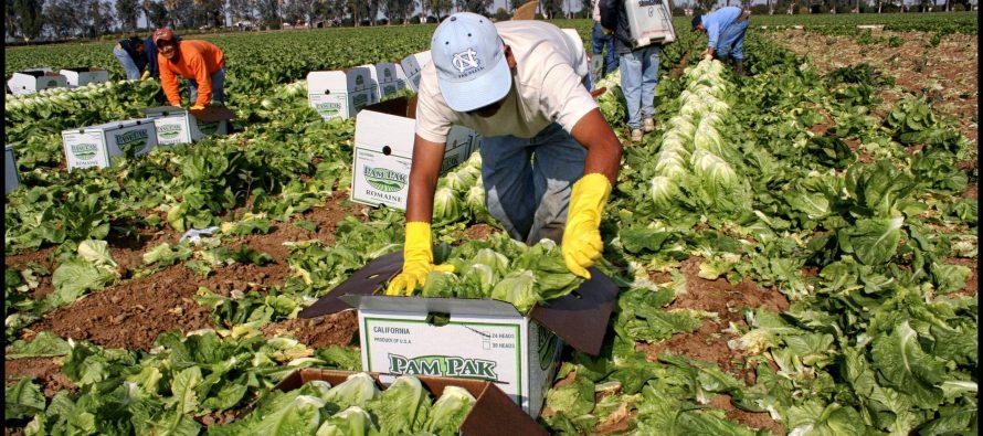 Argentina analiza oportunidades de exportaciones agroalimentarias a México