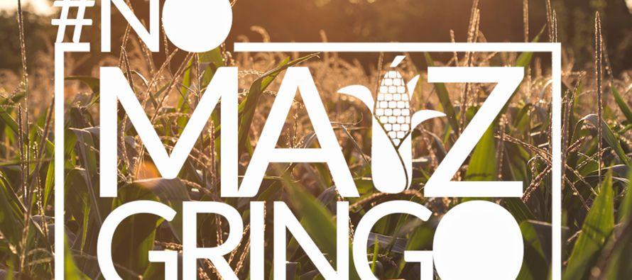 """Campaña en Arizona pide a Senado mexicano boicotear el maíz """"gringo"""""""