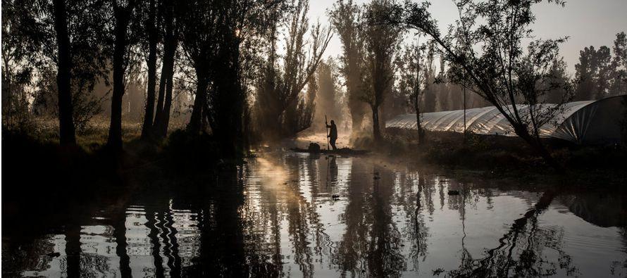 Xochimilco, un vestigio de la vida precolombina, al borde de la extinción
