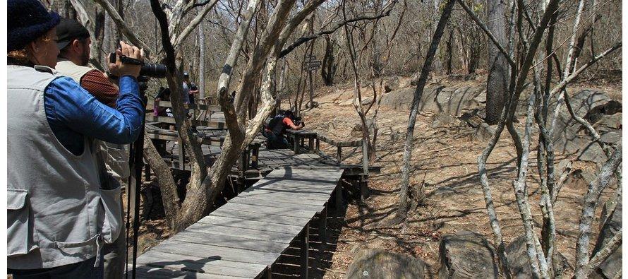 """""""A través de las estaciones de medición sabremos cuáles son los árboles más capaces de..."""