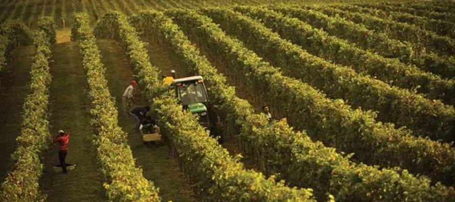 El programa H-2A permite que empleadores agrícolas que prevean escasez de trabajadores nacionales...