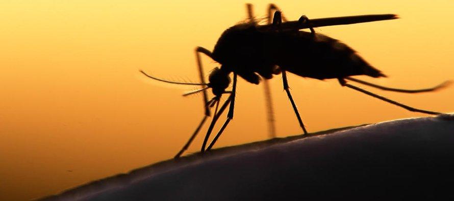 El virus no fue considerado una amenaza importante de salud pública hasta que un brote presentado...