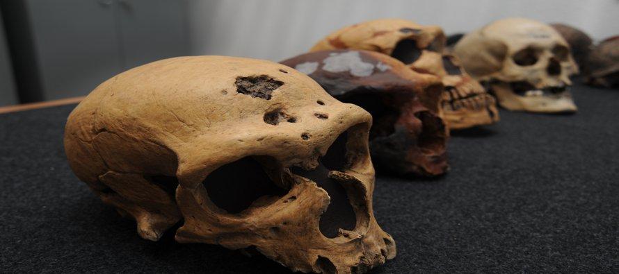 Los homínidos son un grupo extinto del mismo género que los humanos, los únicos sobrevivientes de...