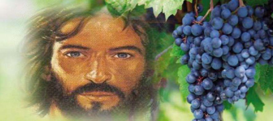 """""""Lo mismo que el sarmiento no puede dar fruto por sí mismo, si no permanece en la vid; así..."""