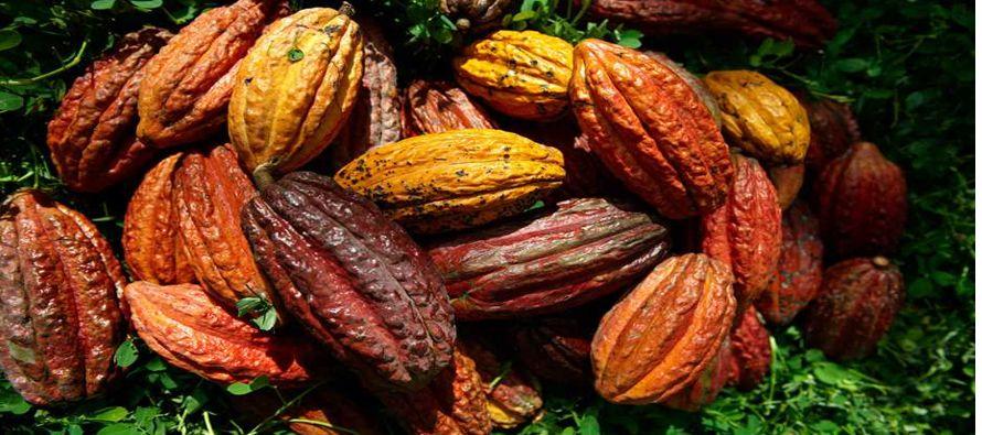 El cacao para julio en Nueva York bajó 17 dólares o un 0,9 por ciento, a 1.877 dólares por...