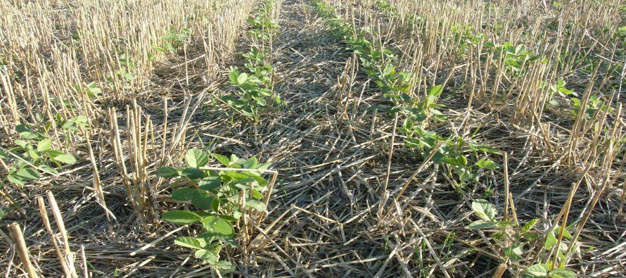 USDA pronosticó además que los suministros de trigo en Estados Unidos serán mayores a lo previsto,...