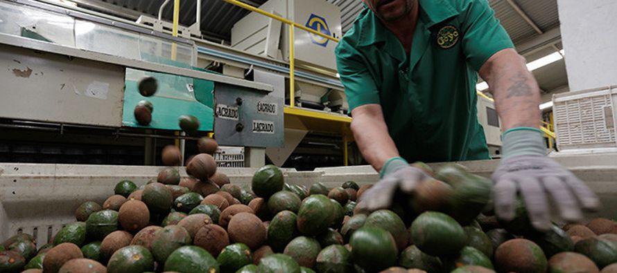 En estos momentos, el precio del aguacate oscila entre los 85 pesos por kilo -casi cinco dólares-,...