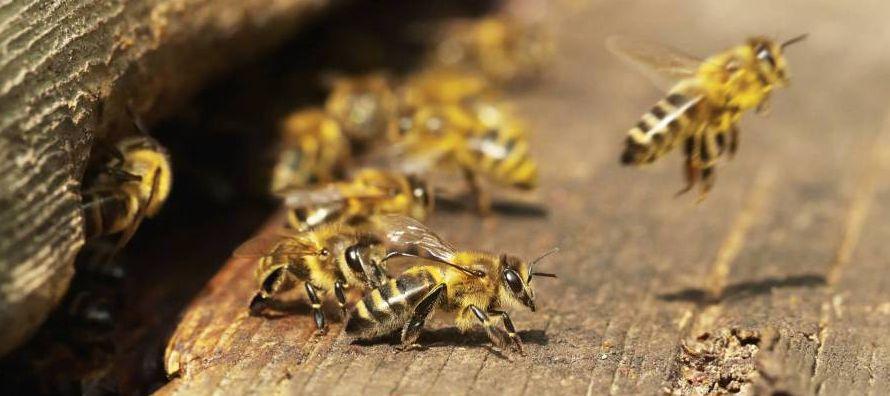 """""""Nuestro objetivo es reunir a los apicultores, los agricultores, la industria, los..."""