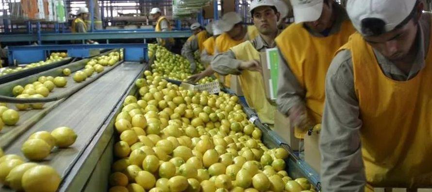 México abre mercado para ingreso de limones argentinos