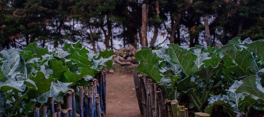 El índice de precios de la Organización de Naciones Unidas para la Agricultura y la...
