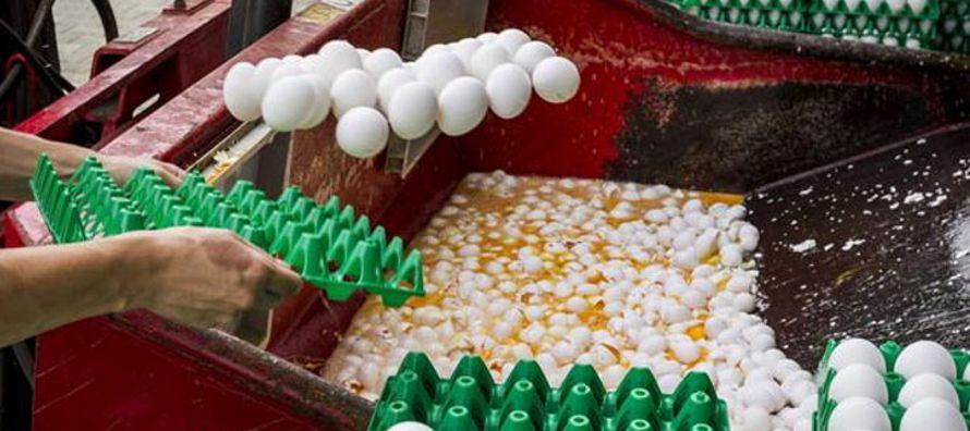 El escándalo de los huevos contaminados supondrá unas pérdidas de al menos 10...