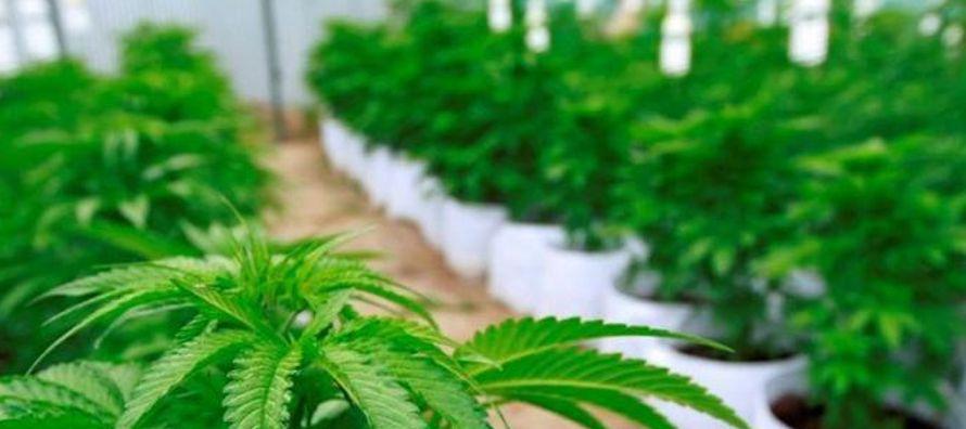 """""""El respaldo al uso libre de la marihuana se debe en parte a las afirmaciones de que es..."""