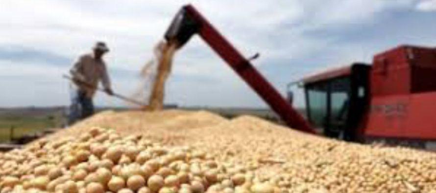 Con respecto al maíz 2016/17, la Bolsa dijo que, en la recta final de su recolección,...