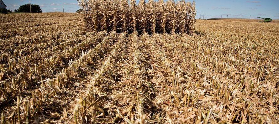 El Departamento de Agricultura de Estados Unidos (USDA por sus iniciales en inglés)...