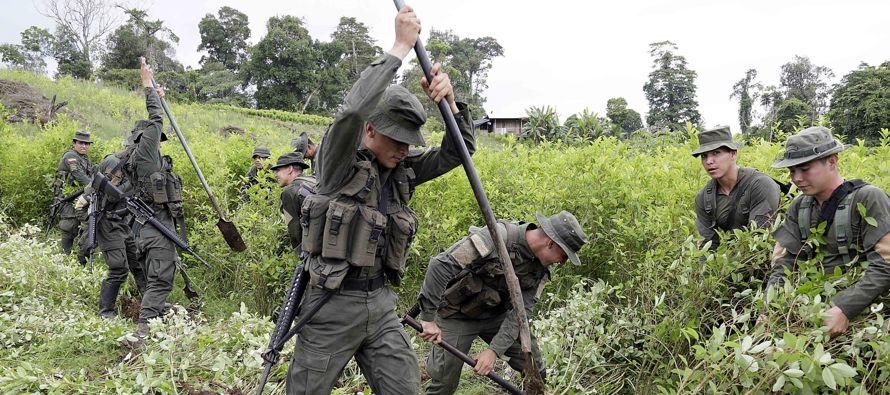 Washington sostiene que los cultivos de hoja de coca en Colombia aumentaron principalmente por la...