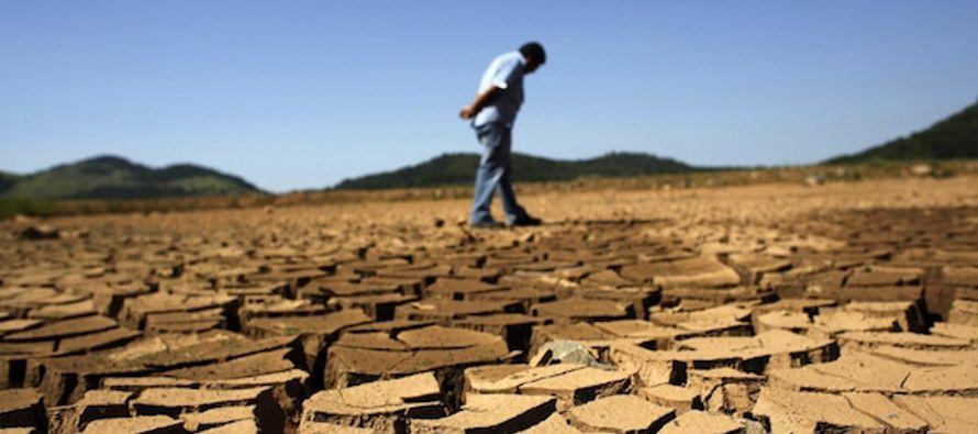 Cooperativas y productores cafeteros de Brasil están rebajando las perspectivas previas de...