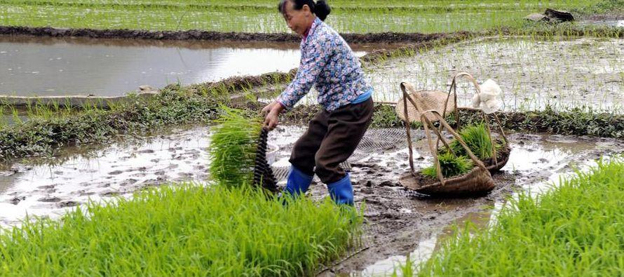 En Heilongjiang, una de las provincias de la zona nororiental del país, conocida como el...