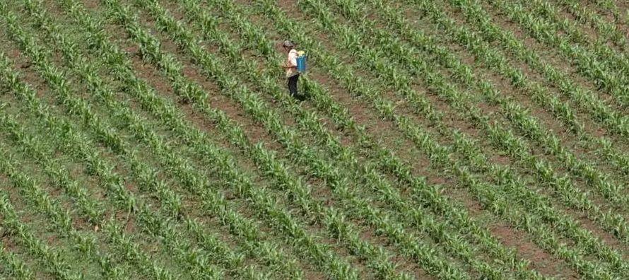 Informó que por cultivos destacan la mayor producción en soya (105,7 por ciento),...