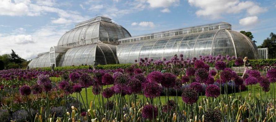 Un quinto de las plantas están actualmente bajo amenaza, pero, pero no existe una...