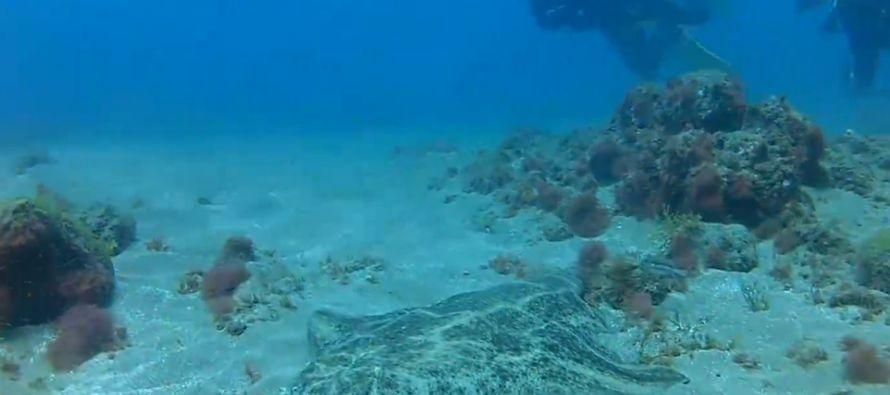 El comisario europeo de Medio Ambiente, Asuntos Marítimos y Pesca, Karmenu Vella,...
