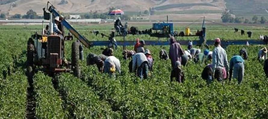 Muchas de las personas desplazadas probablemente volverán a trabajar. Eso, junto a labores...