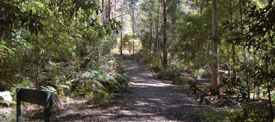 El servicio australiano de parques naturales y vida salvaje describe el Mount Royal National Park...