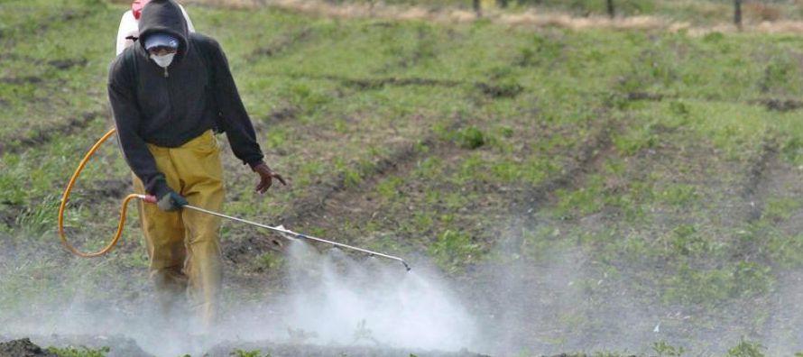 Los pesticidas que se rocían sobre las frutas y verduras se acumulan en la capa externa,...