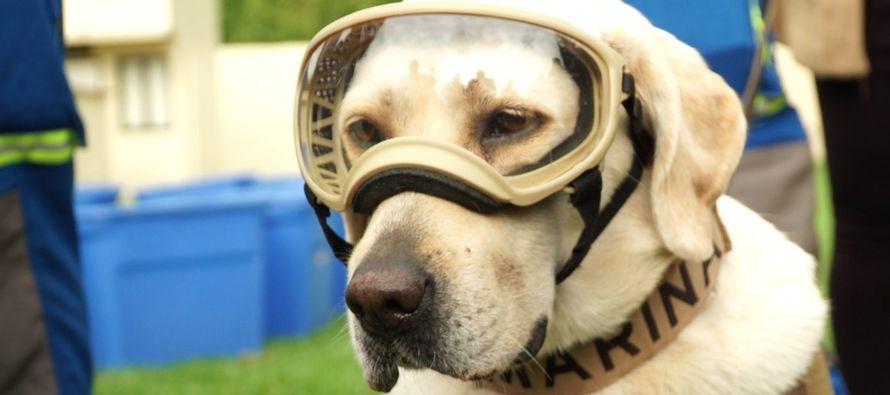 Dentro de la unidad canina hay aproximadamente 200 perros de diversas especialidades –los de...