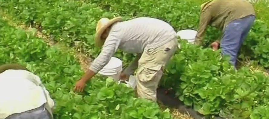 El segundo líder en la agricultura en el viejo continente fue Italia, con 53,4 mil millones...