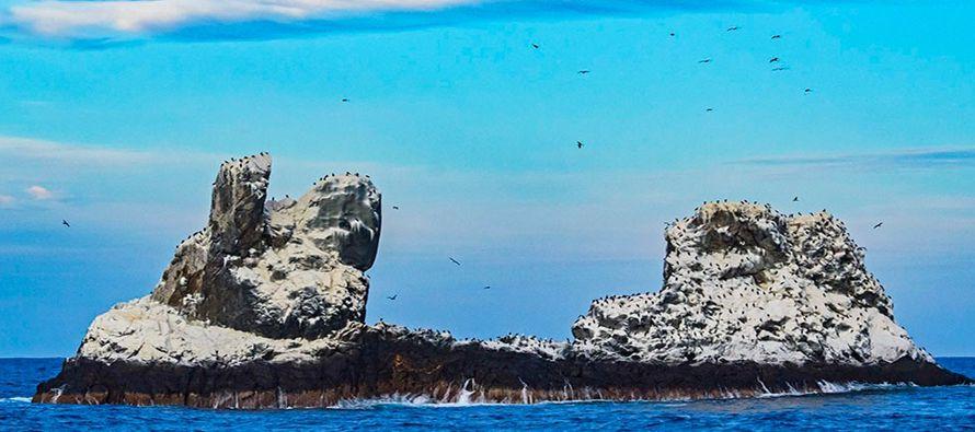 El archipiélago es hoy una joya del medio ambiente. Alberga hasta 750 especies animales como...