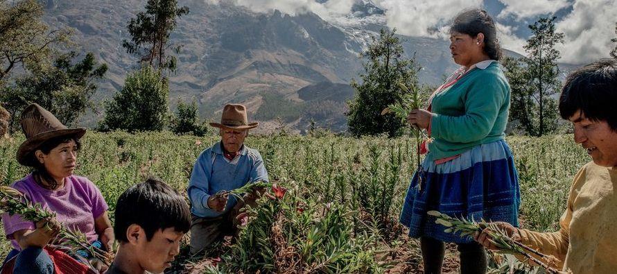 El cambio climático ha sido una bendición aquí en Perú, pero pronto...