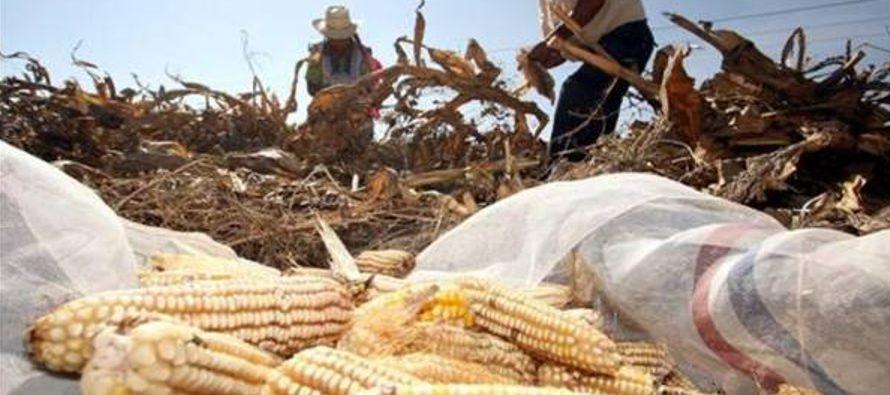 La oficina del Ombudsman denunció la existencia de campos de trabajo agrícola esclavo...