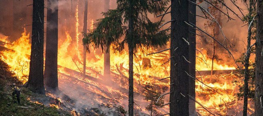 En las últimas horas, las autoridades de California han ordenado evacuar sus casas a los...