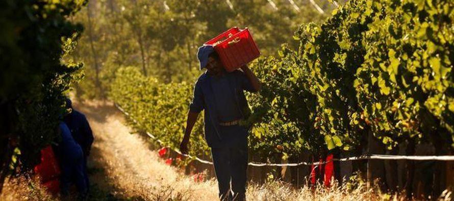 Los viñedos de Sudáfrica se ubican en su mayoría en las zonas costeras de la...