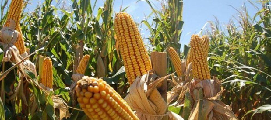 El mayor crecimiento porcentual en las importaciones de granos básicos ocurrió en el...