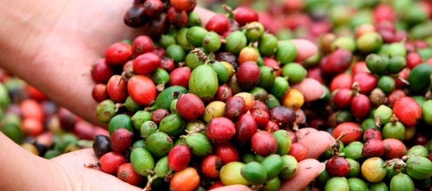 En países como Colombia y Costa Rica, muchos temen que este grano arruine su...