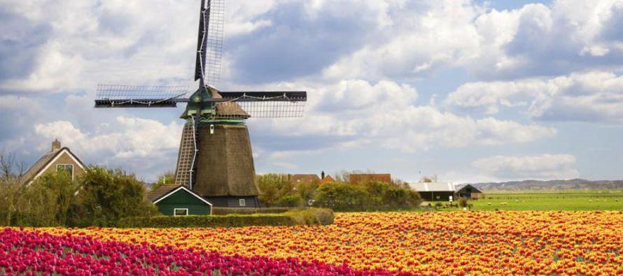 Gracias a que el tulipán era aún un producto no demasiado abundante, aquel castillo...