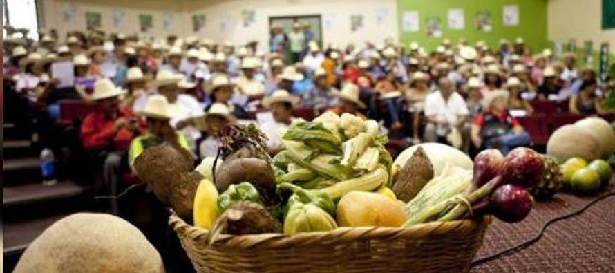 Se refirió así al aumento del hambre en 2,4 millones de personas, hasta 42,5 millones...