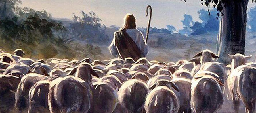 «Mis ovejas escuchan mi voz; yo las conozco y ellas me siguen. Yo les doy vida eterna y no...