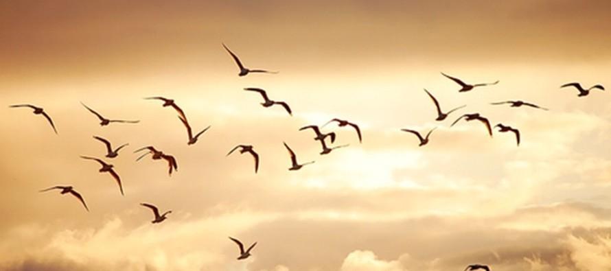 El caos sonoro, una amenaza que enfrentan las aves en las ciudades
