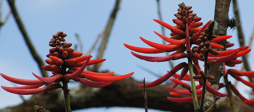 Plantas tradicionales mexicanas perviven como parte de la cultura indígena