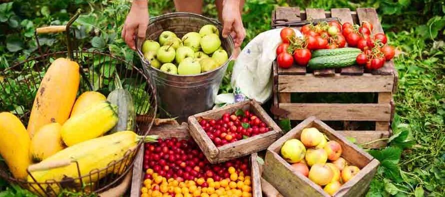 A propósito de la celebración hoy del Día de las Frutas, la oficina...