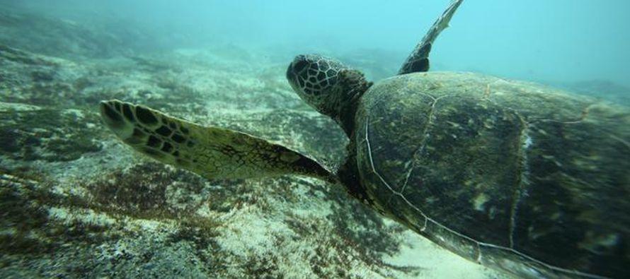 Gran parte de la fauna marina actual no podrá tolerar las temperaturas del océano que...